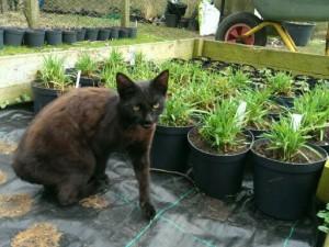 """Planteskolen har fået en ny medarbejder, Nigella """"Jomfru i det grønne"""". I øjeblikket er hun ved at lære at kende forskel på hjertegræs og kattegræs."""