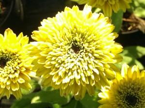 blomster-efteraar-156
